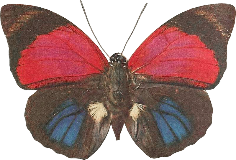 svg download Moth clipart vintage butterfly.  png creative nn.
