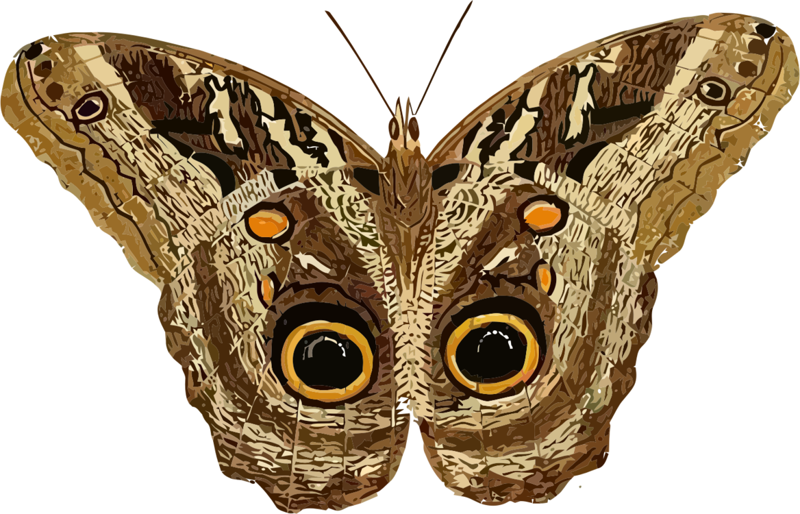 clipart library download Butterfly Luna Moth Computer Icons Download free commercial clipart
