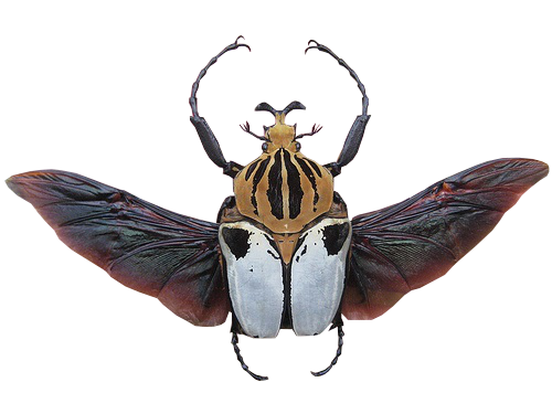 clipart download Insect Structures