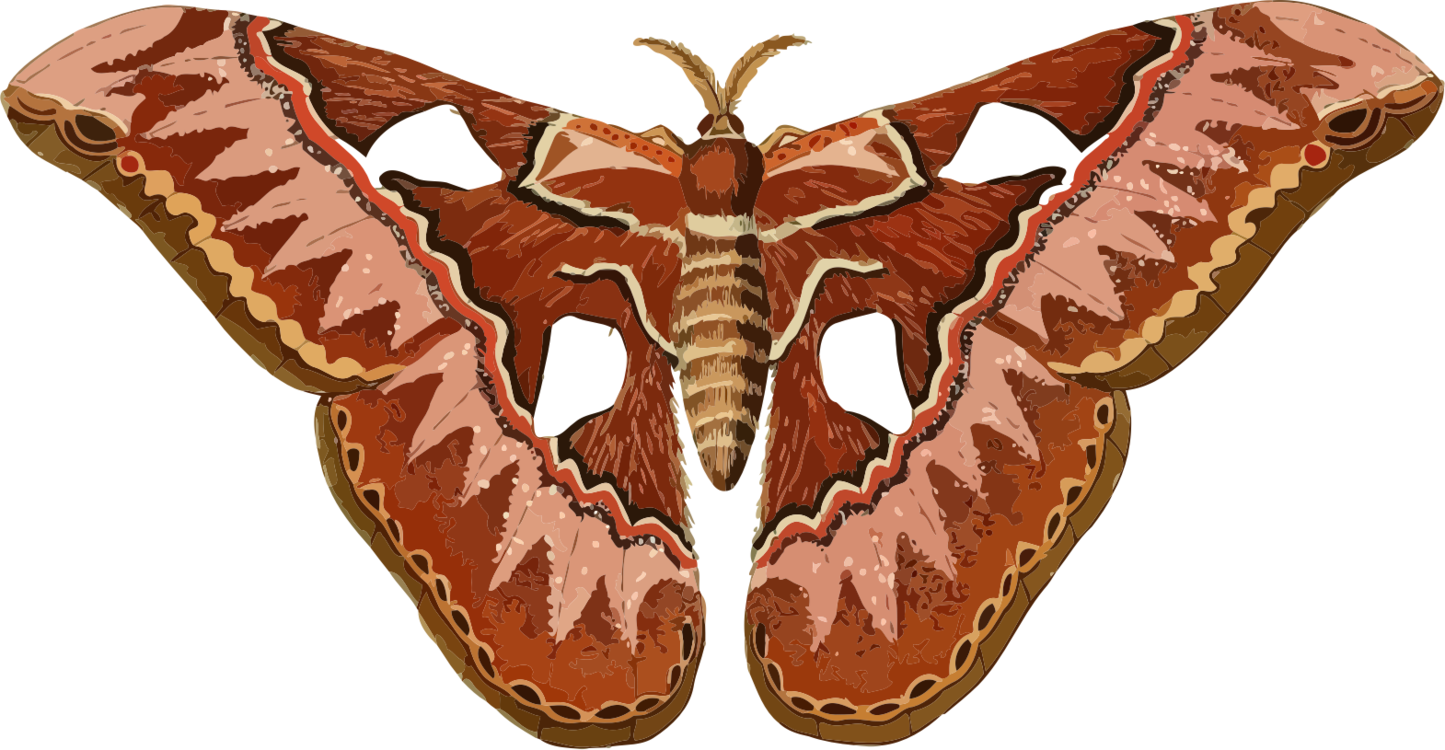 banner freeuse stock Butterfly Insect Nine
