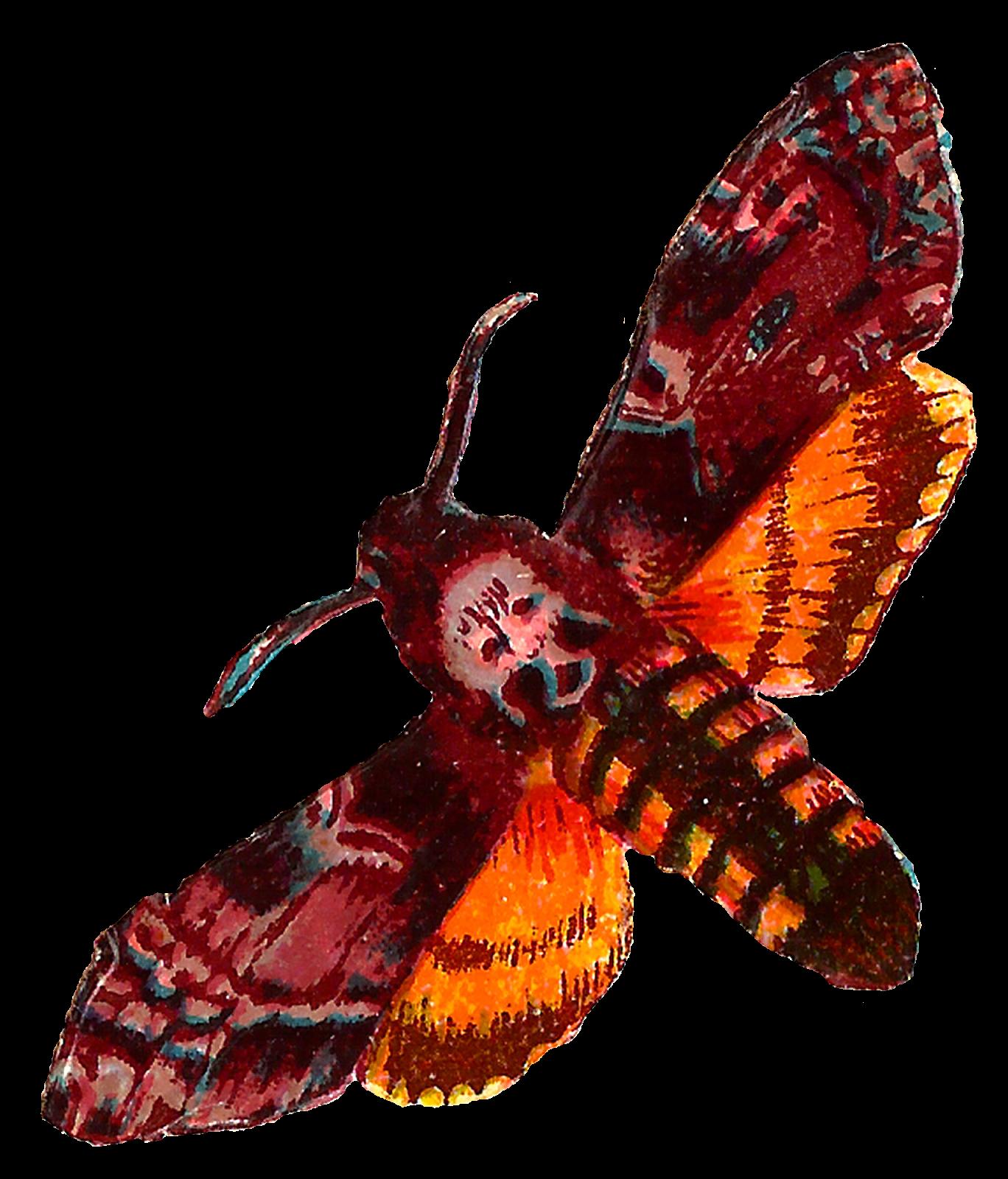 stock Moth clipart death