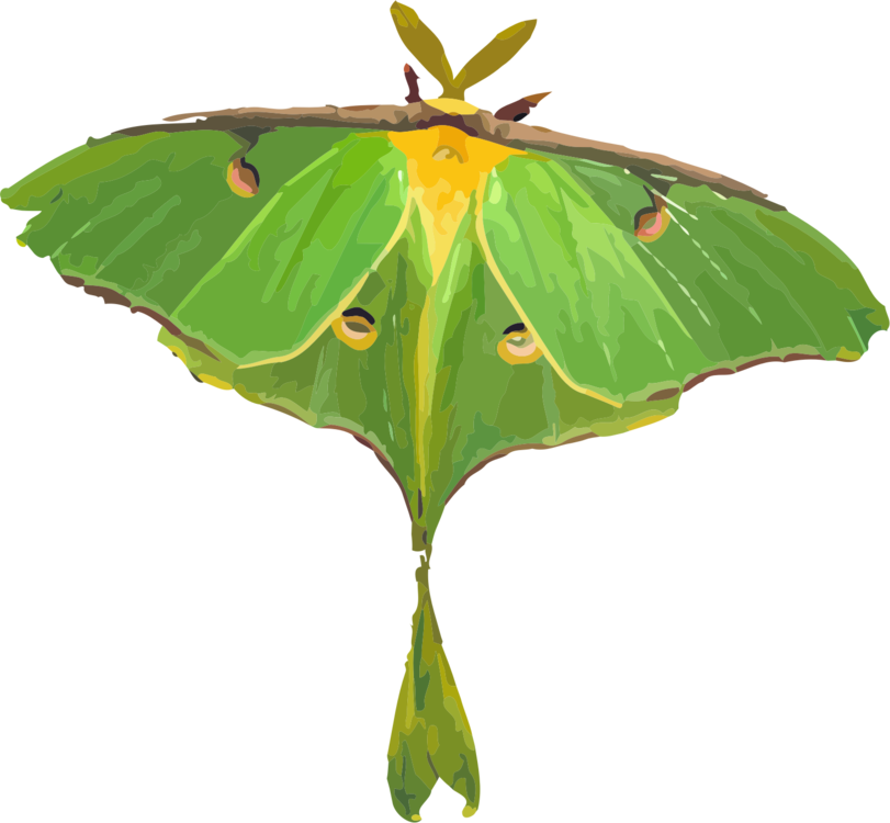 clip black and white library Butterfly Luna Moth Insect Green free commercial clipart