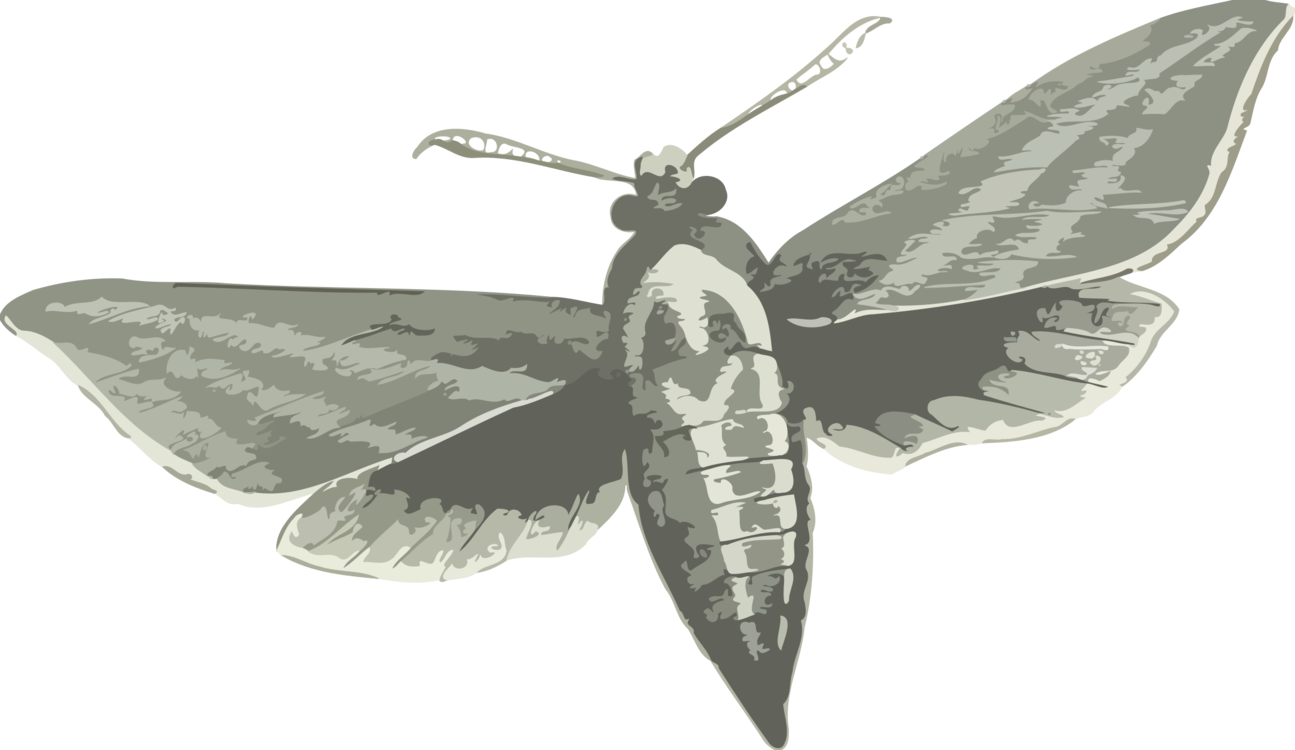clipart royalty free library Silkworm Butterfly Insect Elephant Hawk