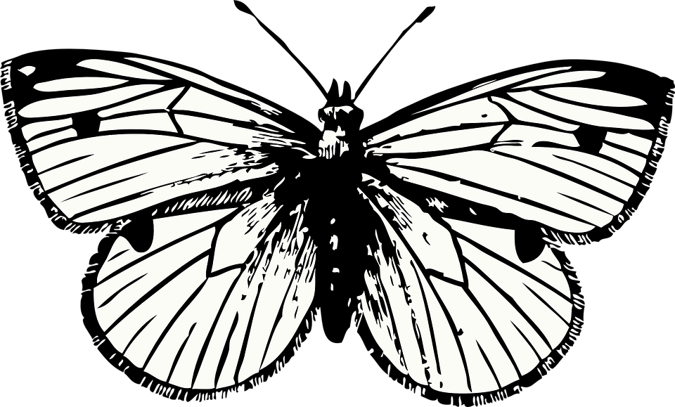 clip stock The Moth and The Butterfly