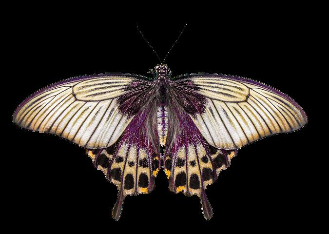 banner transparent stock moth transparent zebra striped #114585034