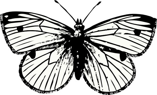 clipart royalty free Moth vector. Free download for