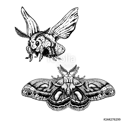 graphic transparent stock Hand drawn set of. Moth vector