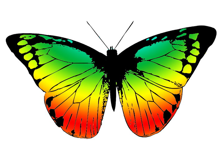 picture royalty free download Collection of free Drawing butterflies color