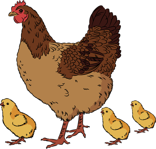 graphic black and white Big clipart chicken chick.  collection of hen.