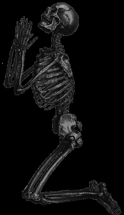 svg black and white Google search pinterest. Bones transparent tumblr