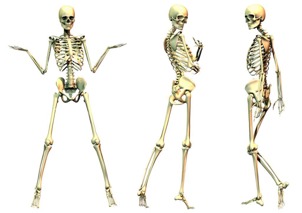 picture free library Png images all file. Bone transparent skeleton pose