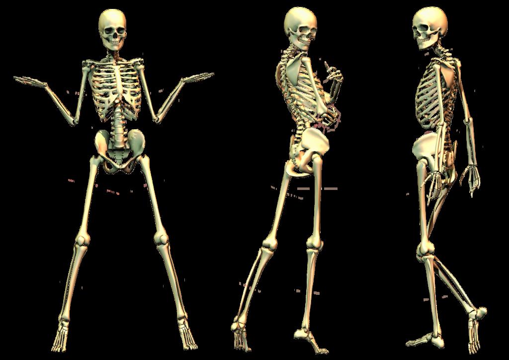 png library download Bones transparent spooky. Skeleton png images all