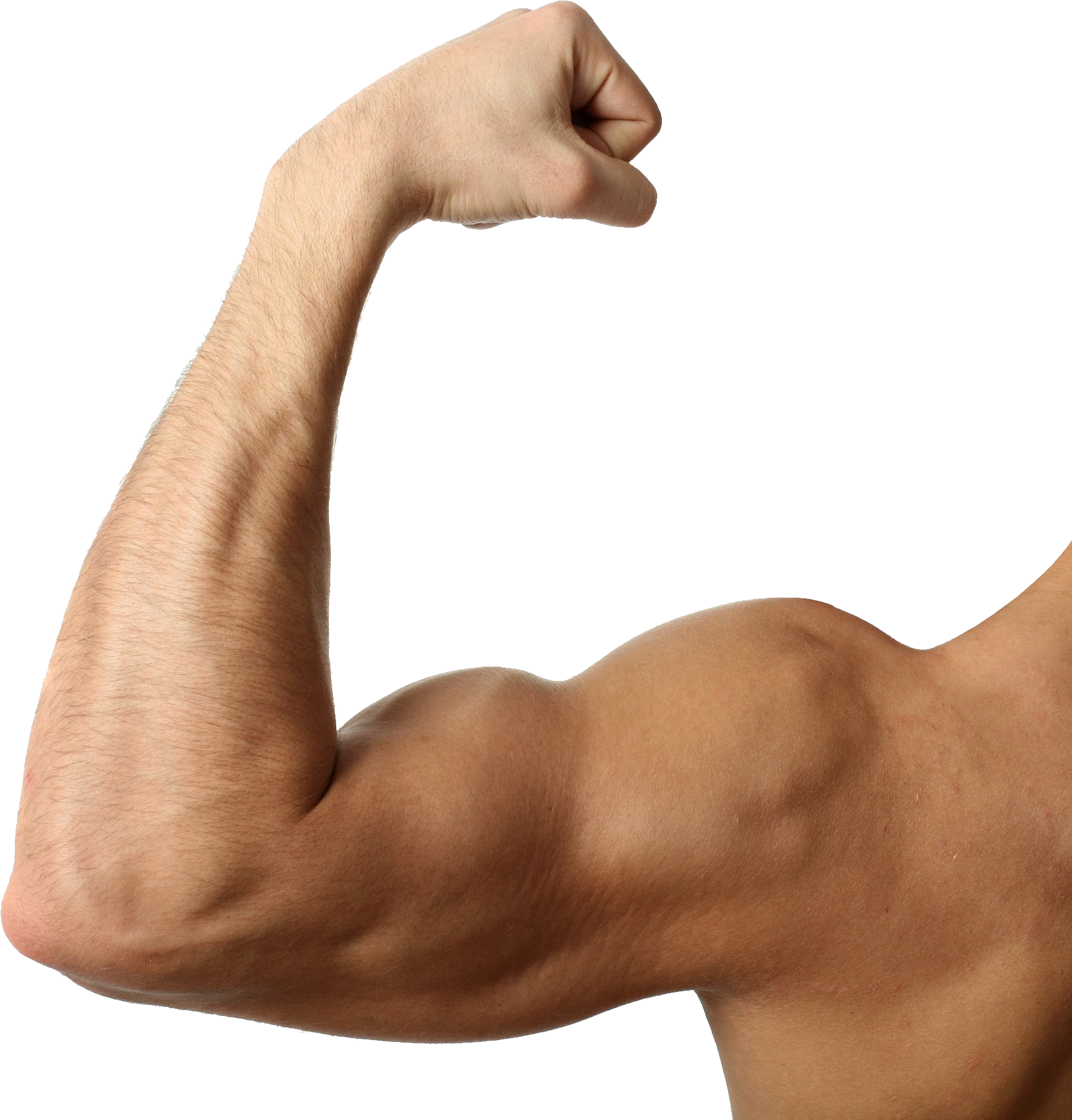 graphic stock Muscle png image purepng. Arms transparent
