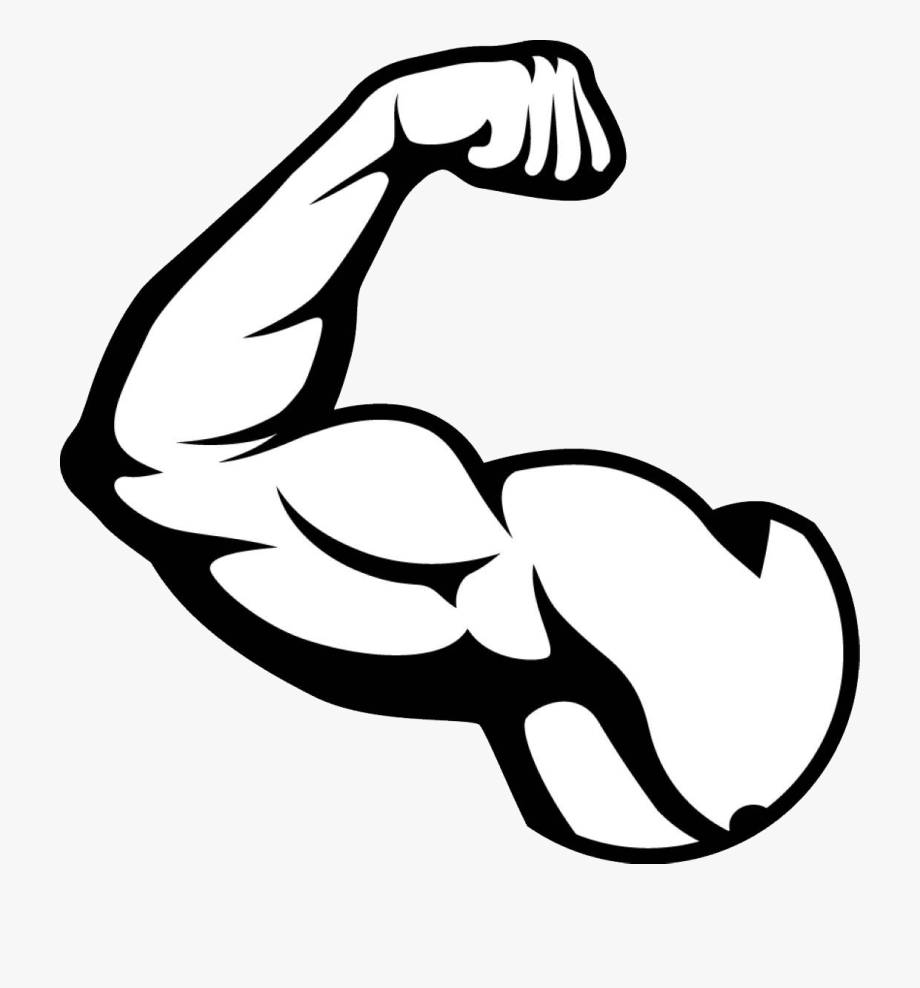 banner freeuse library Muscle png picture muscles. Muscular arm clipart