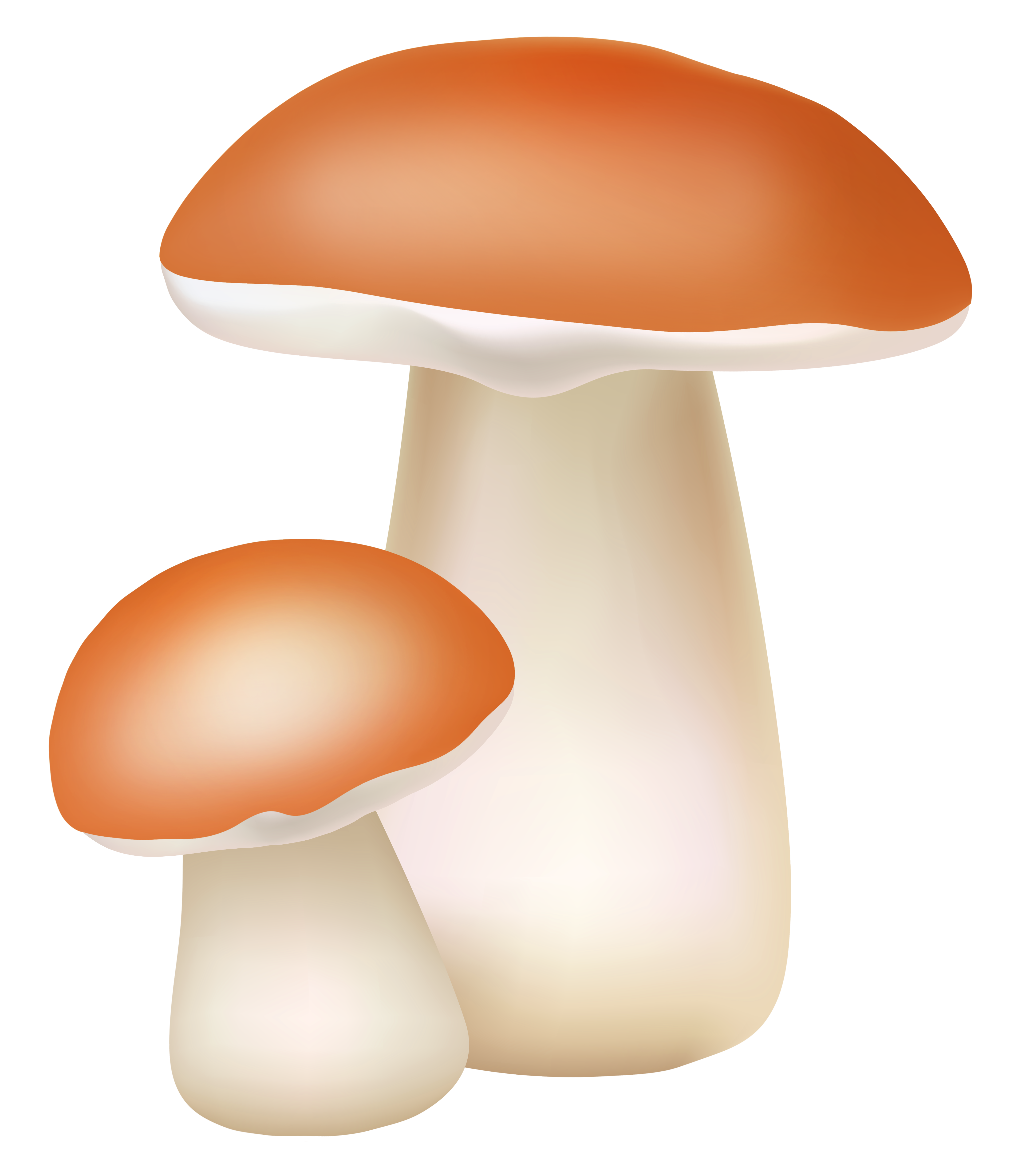 banner royalty free library Mushroom clipart agaricus. Two mushrooms png cliaprt.