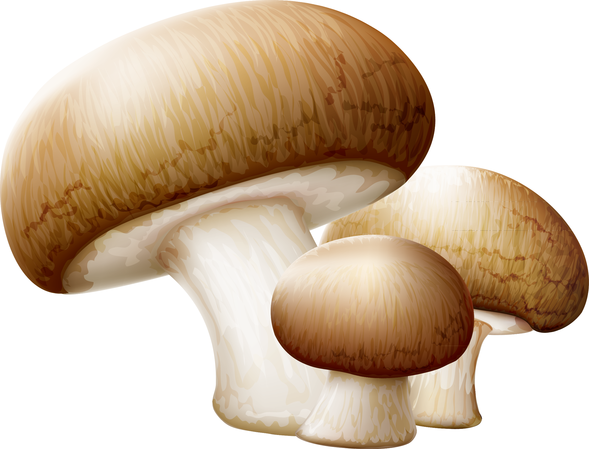 clipart royalty free Common edible clip art. Mushrooms clipart orange mushroom.