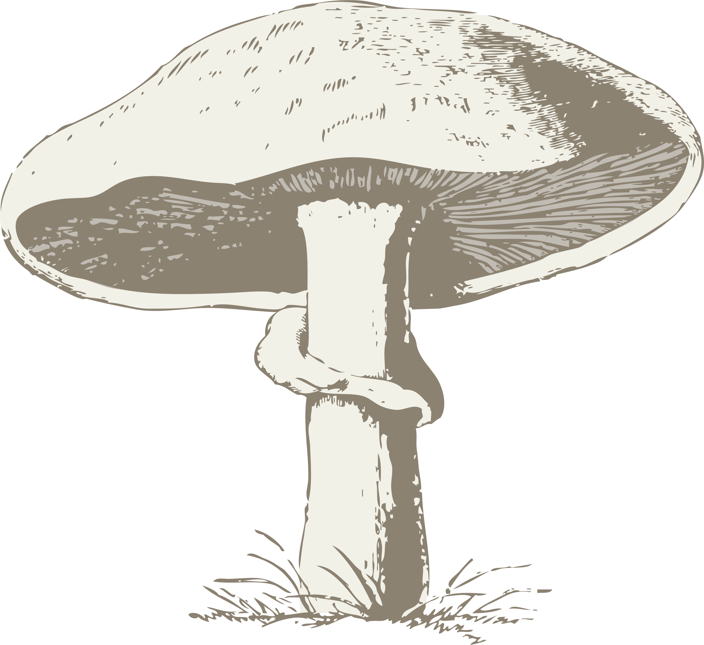 svg freeuse stock Black And White Mushroom Drawing at GetDrawings