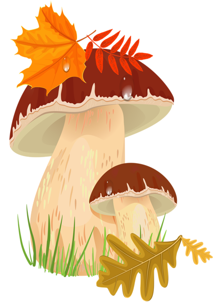 clipart freeuse stock Fall png picture sz. Mushrooms clipart vintage.
