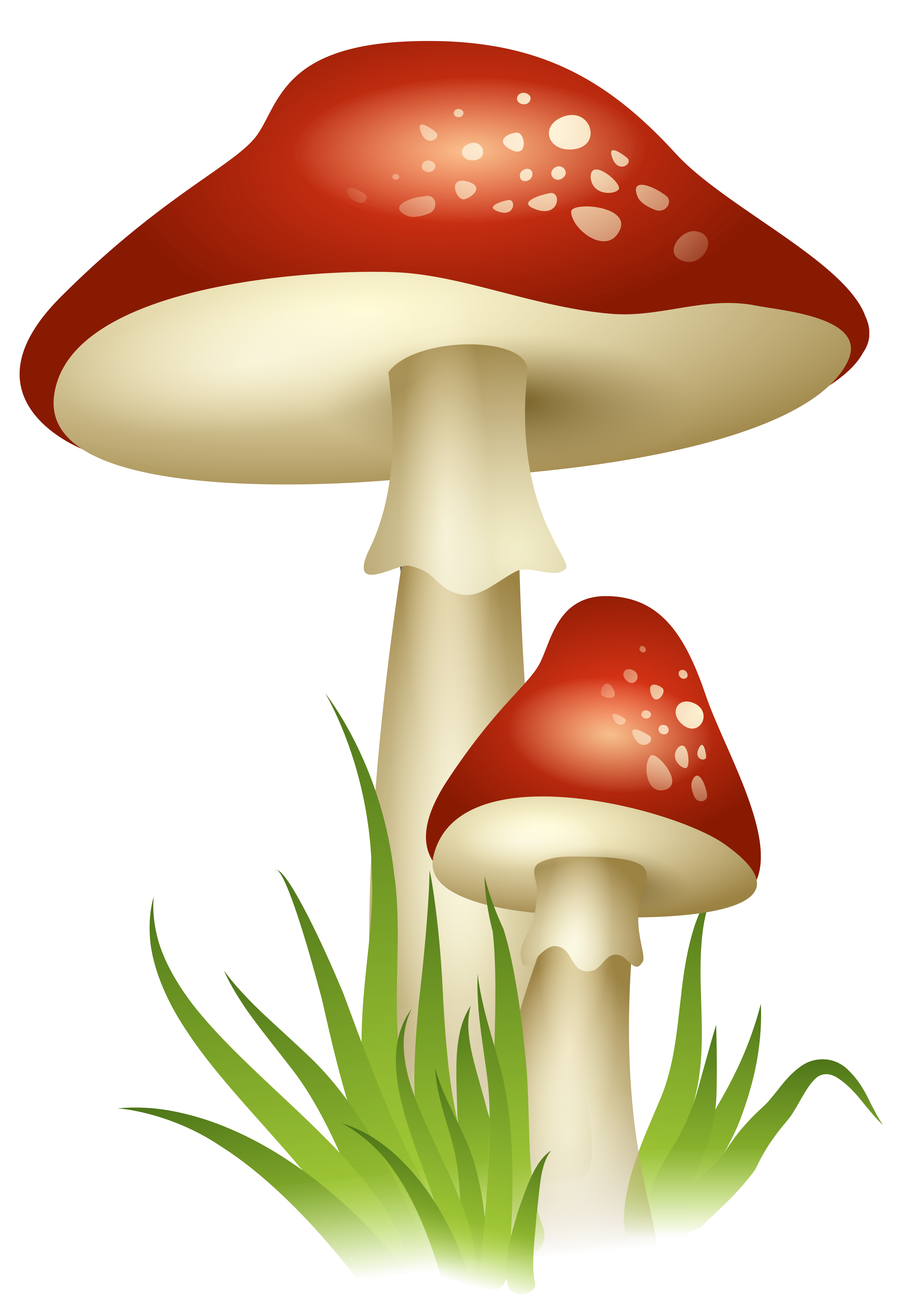 png transparent library Gnome clipart woodland mushroom. Mushrooms transparent png picture
