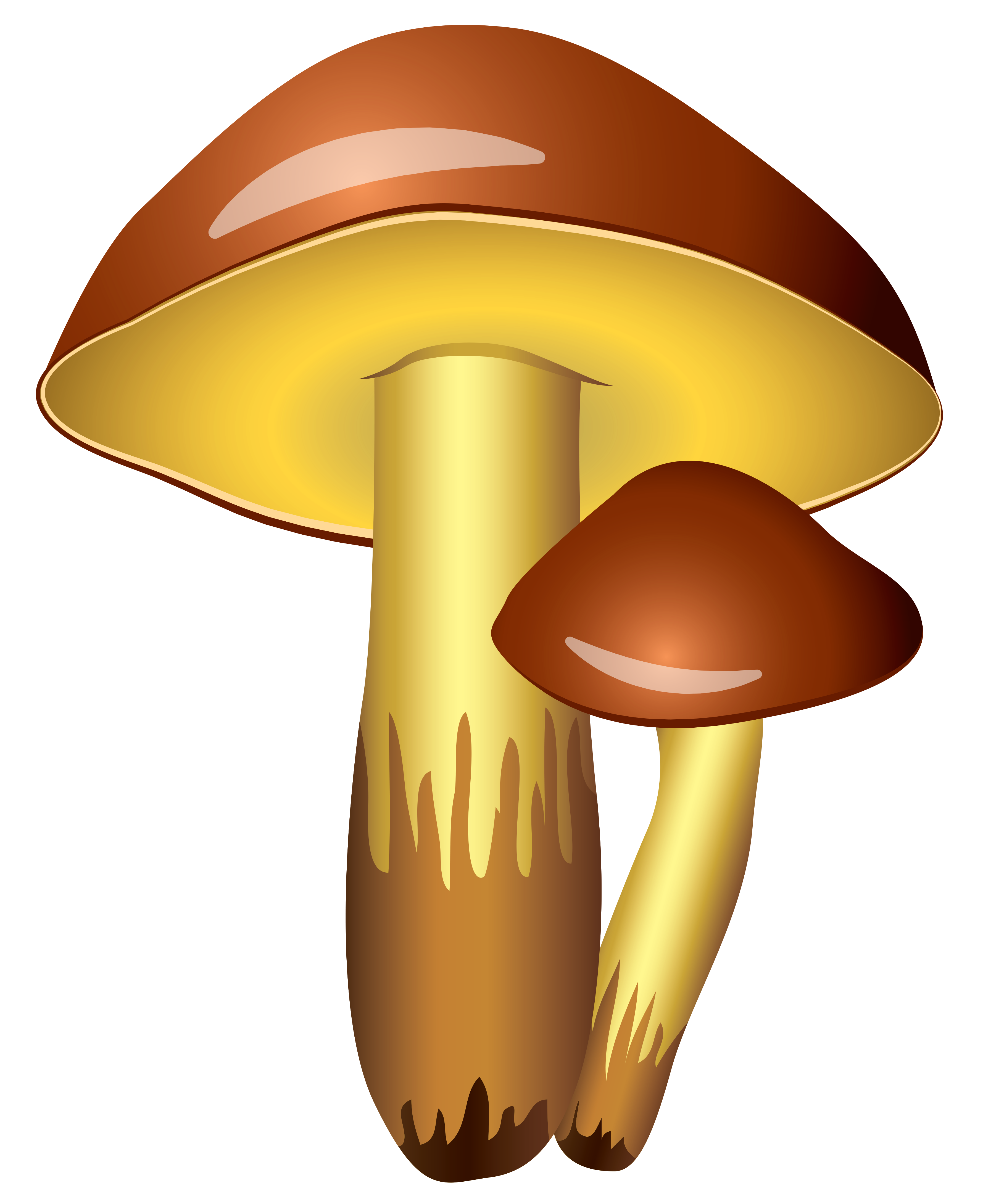 png transparent library Mushroom clipart agaricus. Mushrooms transparent png picture.