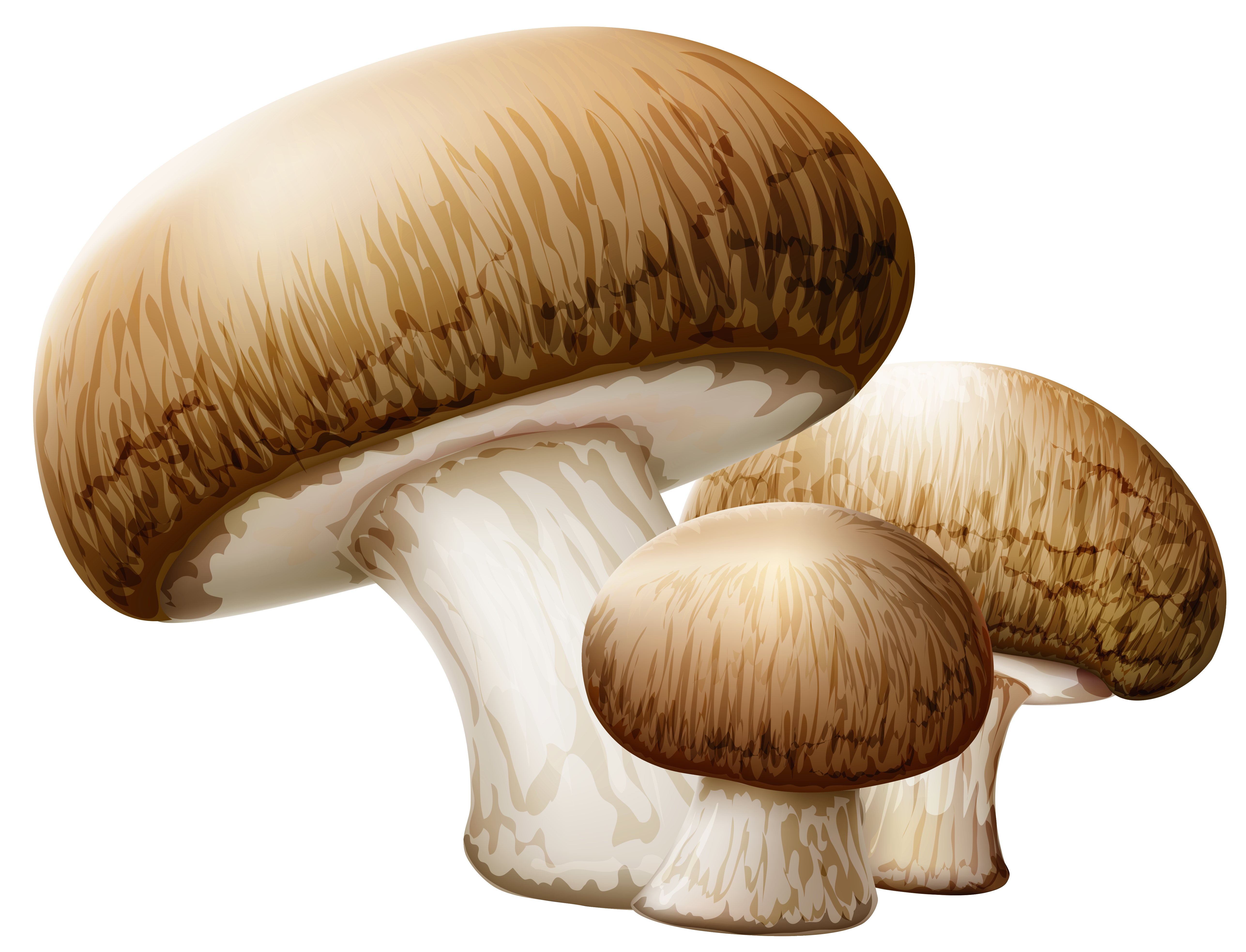 clip transparent Png picture gallery yopriceville. Mushrooms clipart