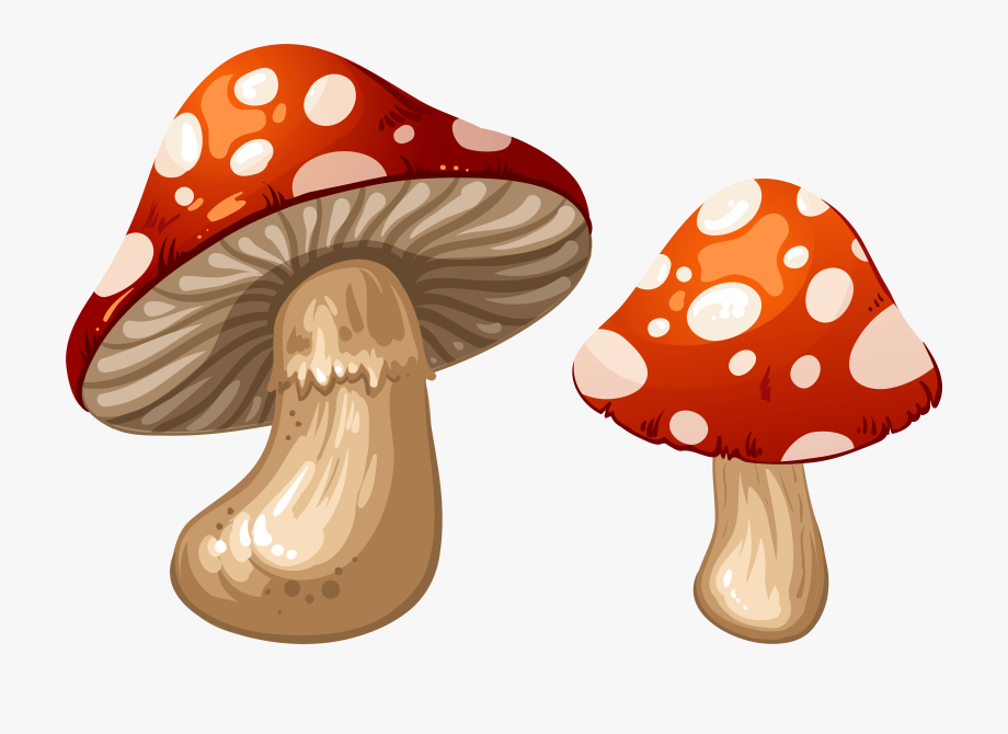 image royalty free download Mushrooms clipart. Png clip art mushroom.