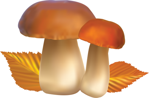 clip freeuse stock Twenty five isolated stock. Mushrooms clipart orange mushroom.