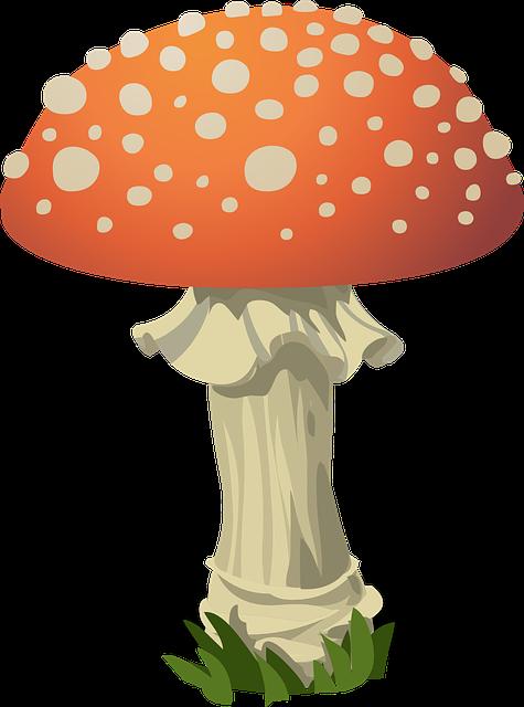 clipart royalty free Mushrooms clipart orange mushroom. Magic so kannst auch.