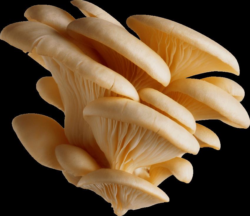 svg library library Mushrooms clipart orange mushroom. .