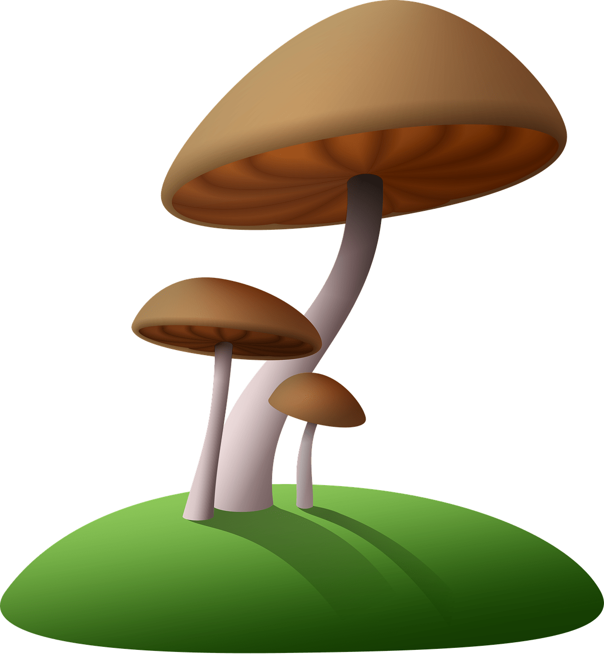 picture library library Mushrooms clipart transparent background. Brown png stickpng.