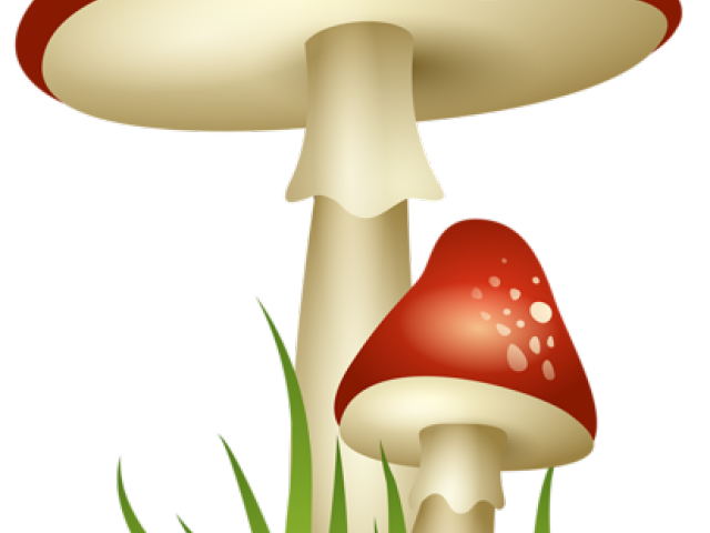 vector library stock Mushrooms clipart vintage. Mushroom free on dumielauxepices.