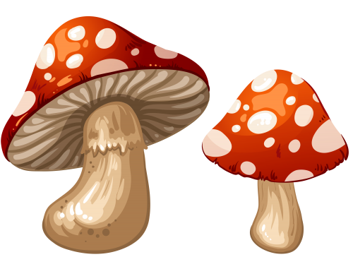 png library library Mushrooms PNG Clip Art
