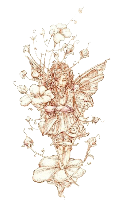 jpg download Flower Fairies of the Wayside Elf Drawing Fairy