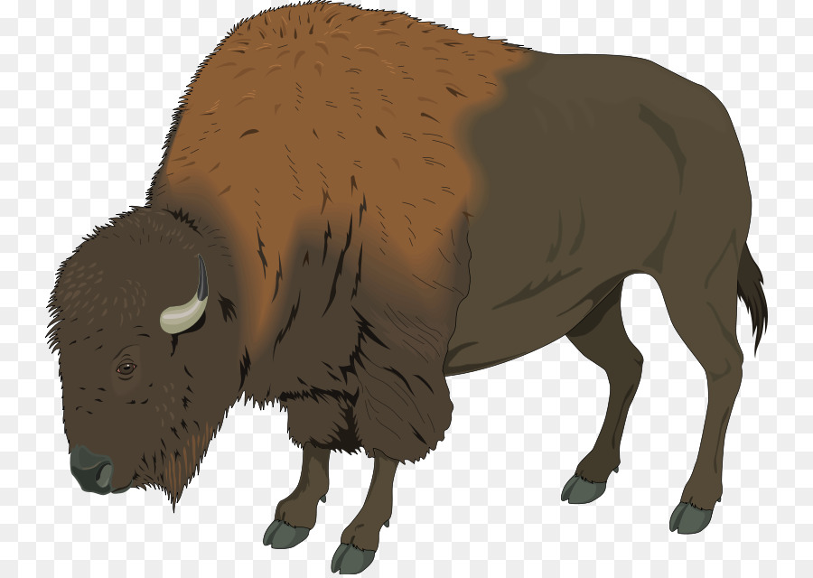 graphic free download Native american clipart american bison. .