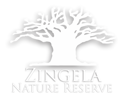 picture black and white Zingela the most majestic. Nature clipart nature reserve.