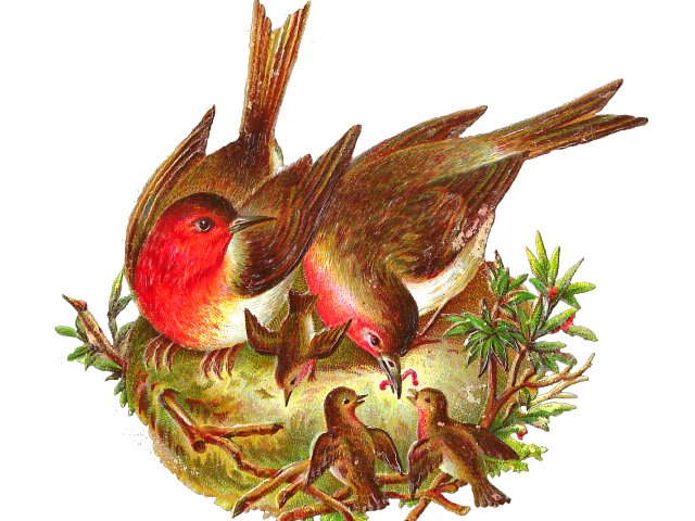 free download Nest clipart bird food. Birds three free on.