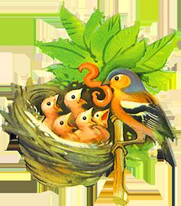 png freeuse Chaffinch feeding youn birds. Nest clipart bird food.