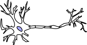graphic stock Wt without myelin clip. Neuron vector