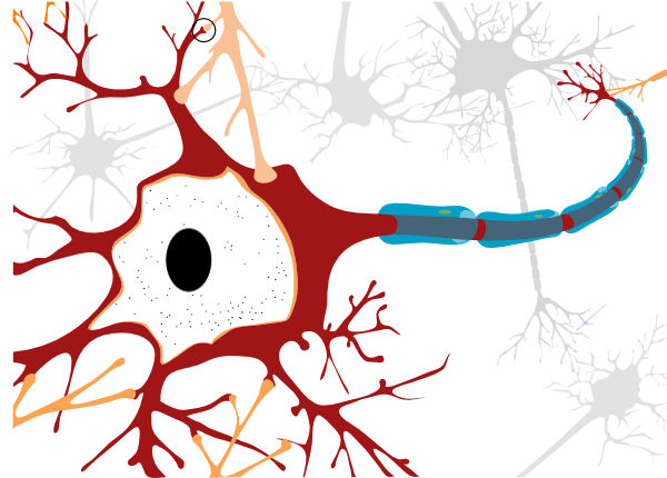 graphic free library Simple unlabelled clip art. Neuron vector