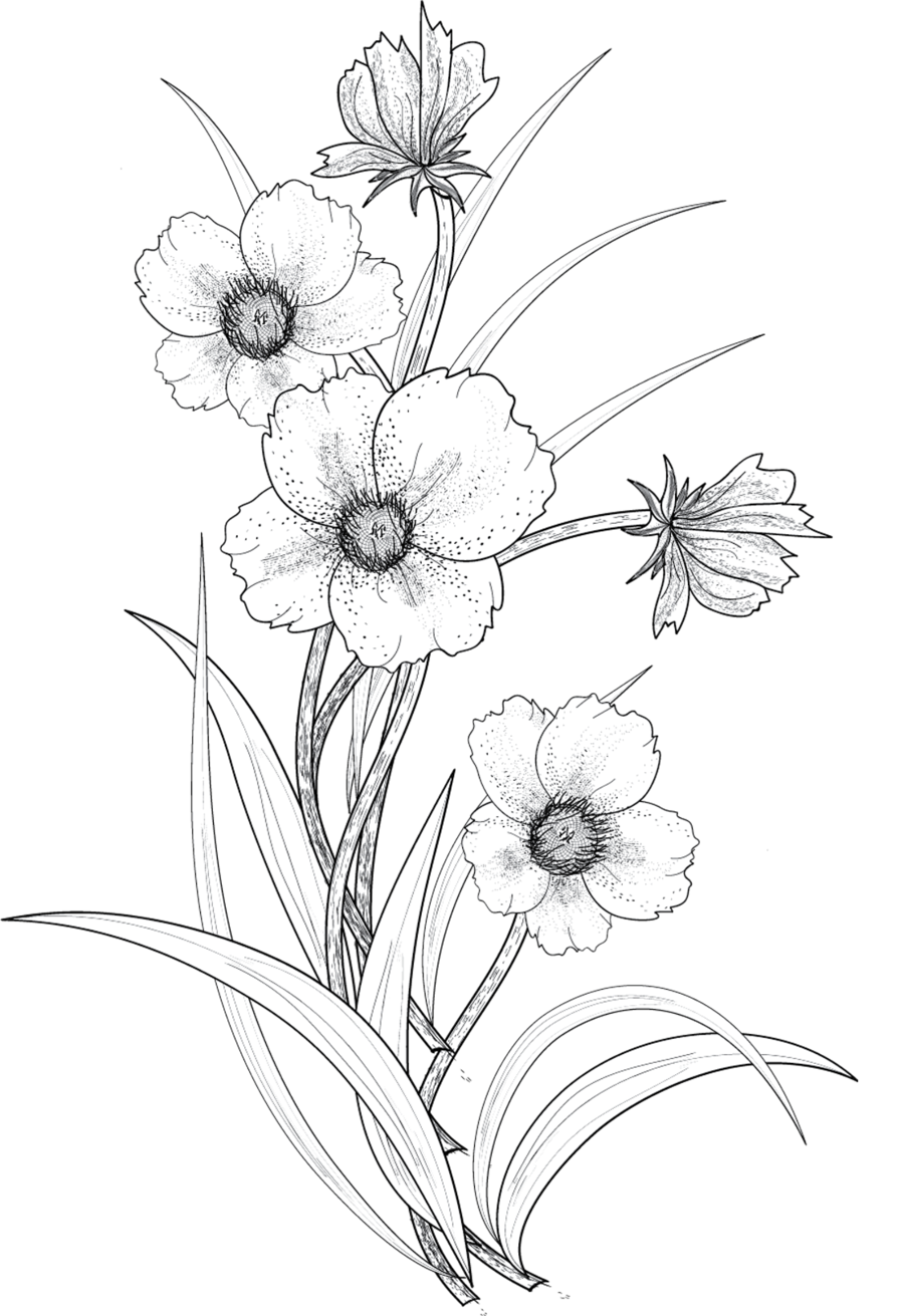 picture royalty free library Flower Drawing Tumblr at GetDrawings