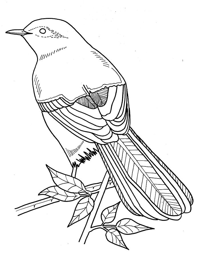 clipart library Nightingale drawing artwork.