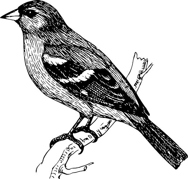 clip art black and white library Gratis afbeelding op pixabay. Typography drawing bird