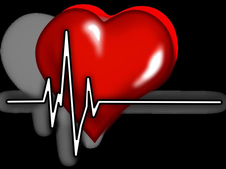 vector Medical Cardiac