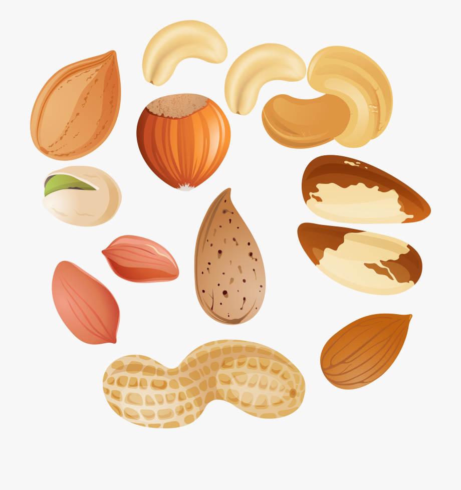 svg stock Nut clipart. Nuts png clipar image