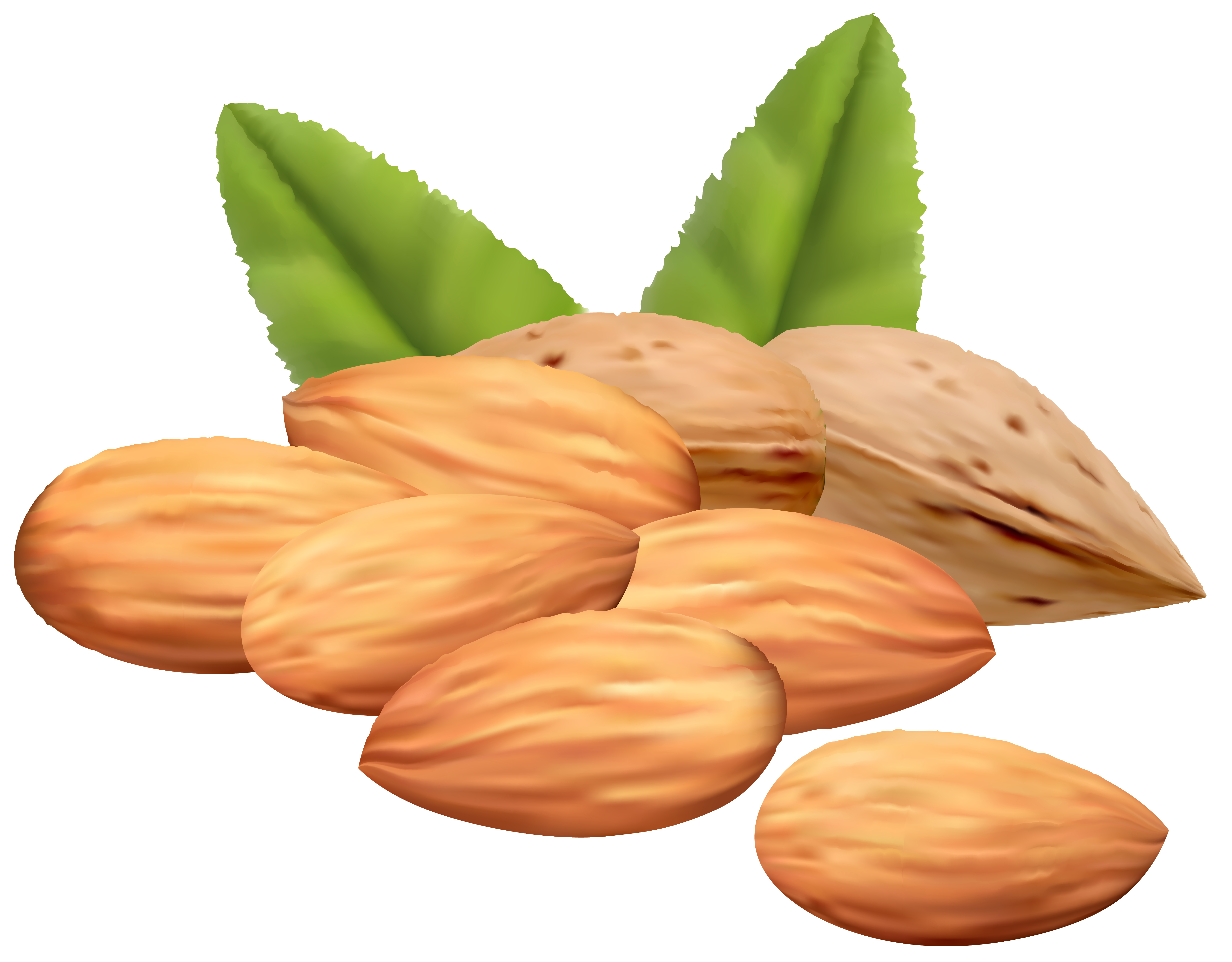 clipart Almond nuts png image. Nut clipart