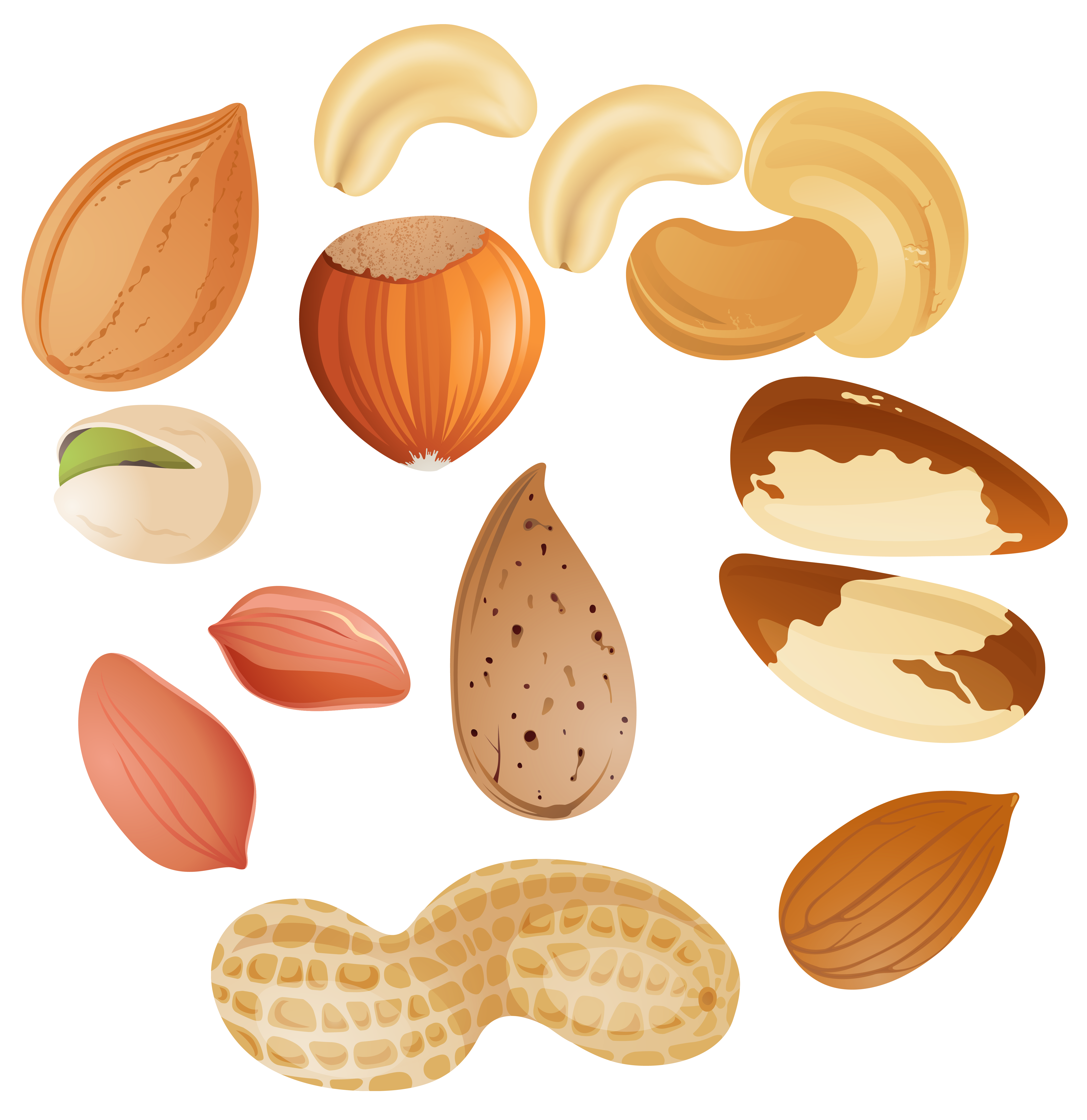 clipart royalty free  collection of nuts. Nut clipart