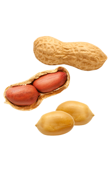 png royalty free library Peanut PNG Transparent Images