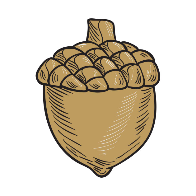 png download Acorn . Nut drawing