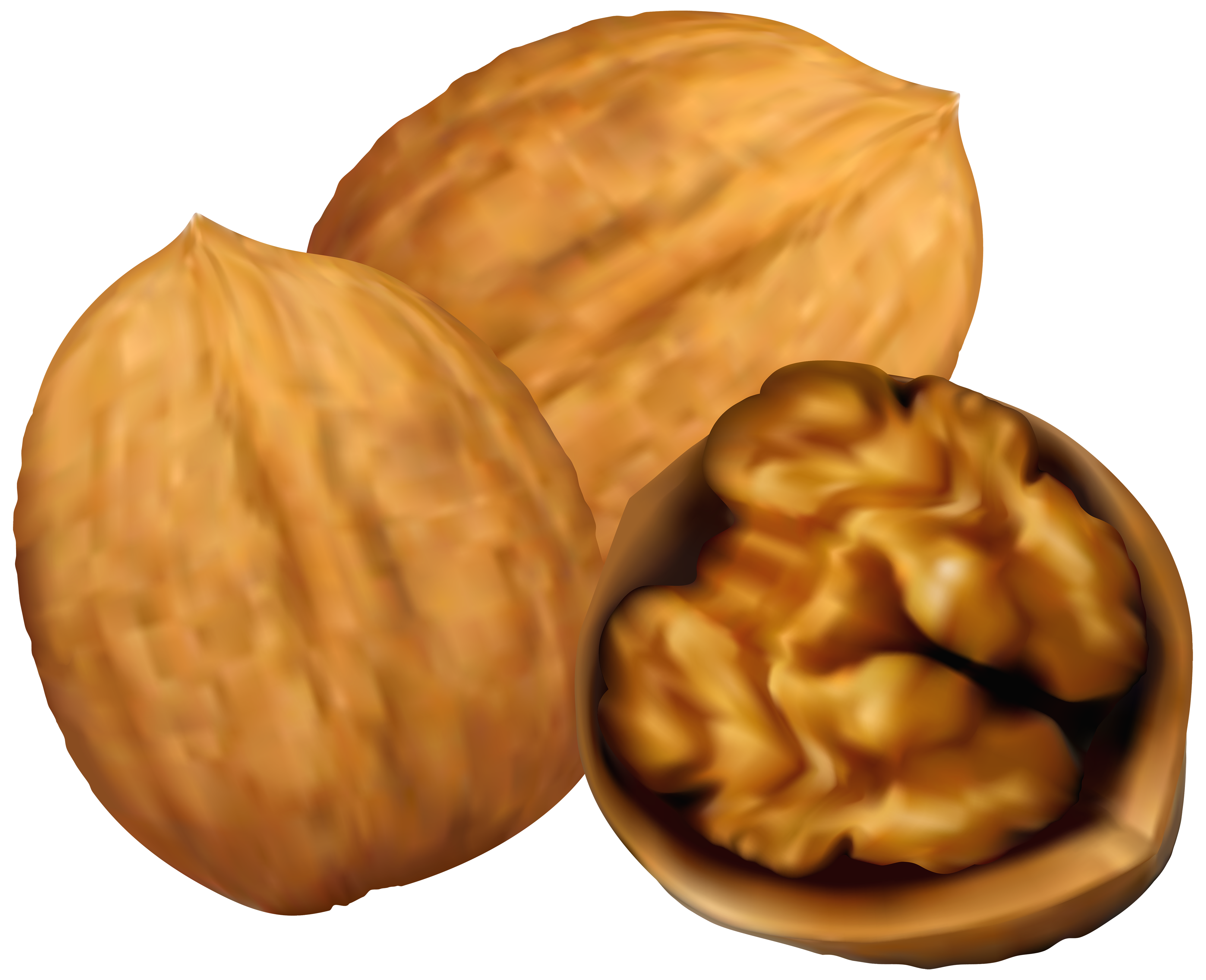png free Nuts clipart. Walnuts png clip art.