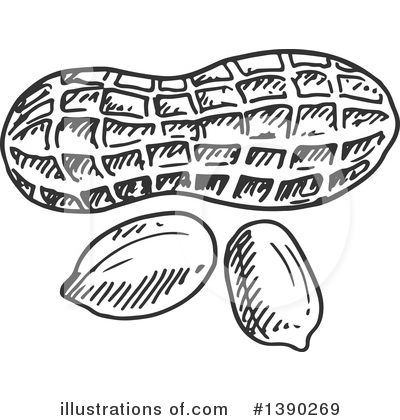 clipart library Nuts clipart black and white.  peanut for free